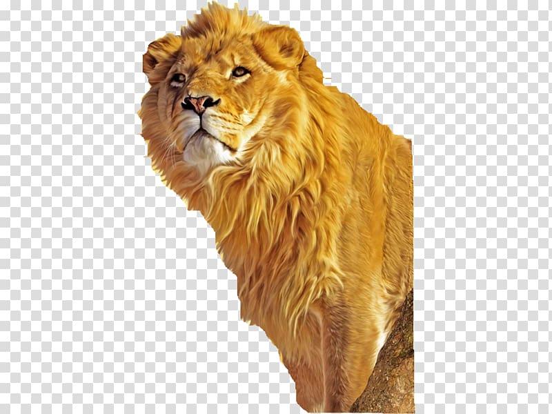 Lion Simba Mufasa Tiger , Leon transparent background PNG.