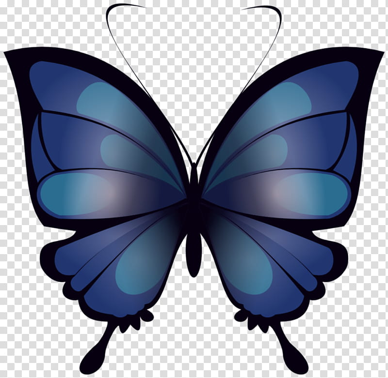 Mariposa Azul blue butterfly transparent background PNG.