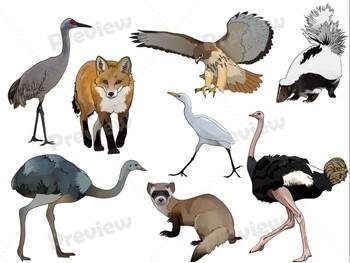 Grassland Animals Realistic Clip Art.