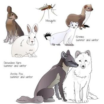 Arctic Tundra Animals Realistic Clip Art.