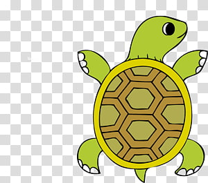 Tortuga transparent background PNG cliparts free download.