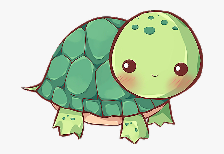 tortugas #tortuga #mar.