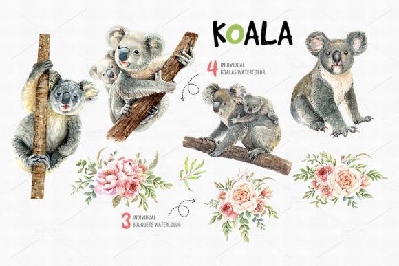 Koala Bear Animals Watercolor Cliparts.