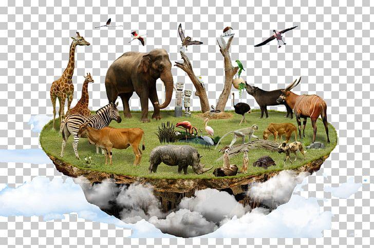 Biodiversity Ecology Land Use PNG, Clipart, Aquatic Animal.