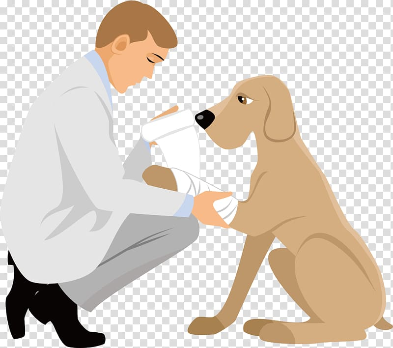 Puppy Cartoon Physician, cartoon animal doctor transparent.