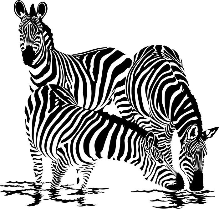 Gallery For > Zebra Drinking Water Drawing.