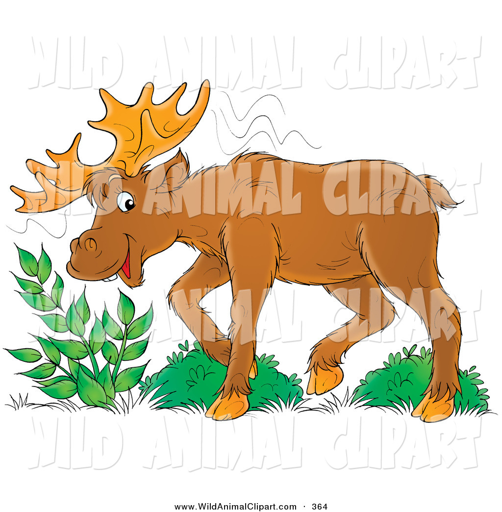 Clip Art of a Moose Eating Leafy Green Plants and Looking.