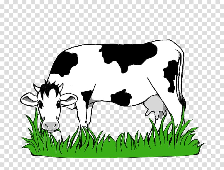 White and black cattle eating grass art illustration, Dairy.