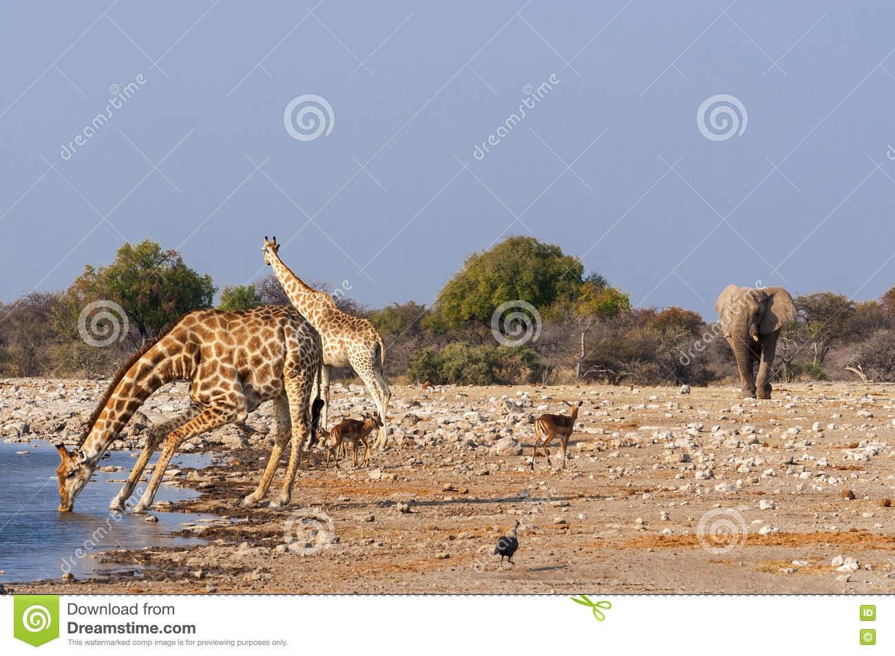 Group Of Wild Animals Near A Waterhole In The Etosha National Park.