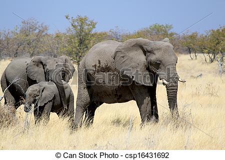Stock Photographs of African elephant bull in Etosha Wildlife.