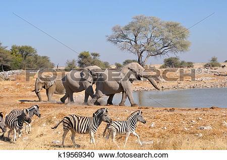 Stock Photography of Elephant squabble, Etosha National park.