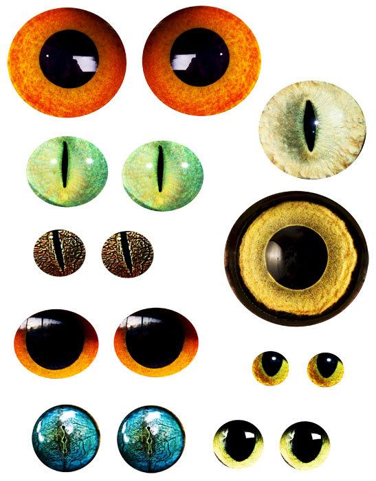 Free Animal Eyeball Cliparts, Download Free Clip Art, Free.