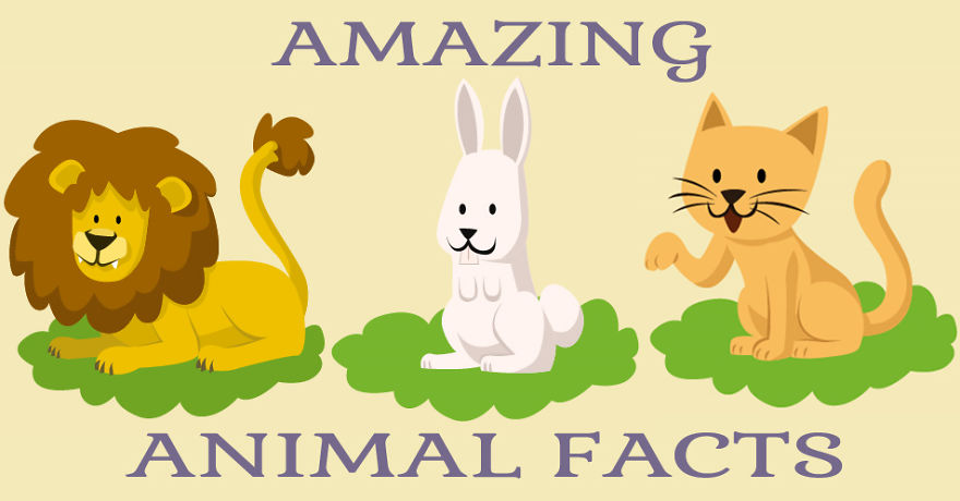 9 amazing animal facts you never knew.
