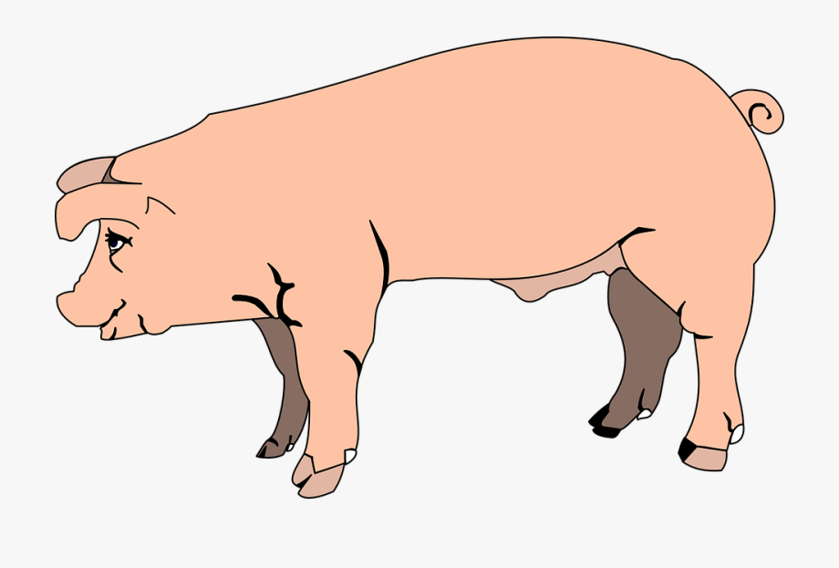 Pink Pig View Barn Farm Side Animal.