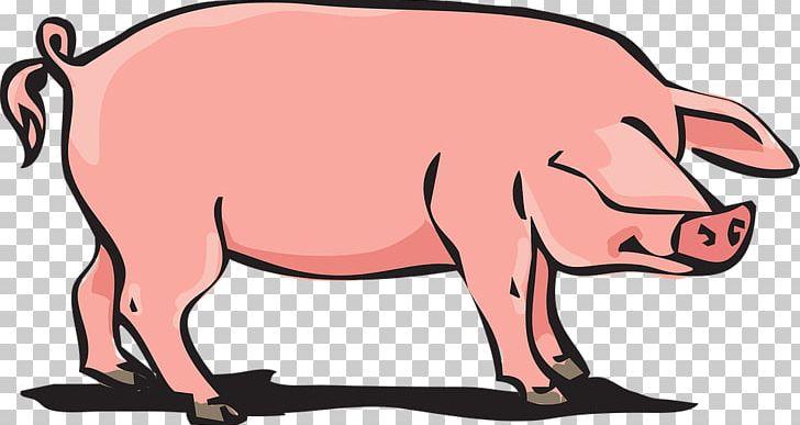 Domestic Pig PNG, Clipart, Animal, Animal Farm, Animal.