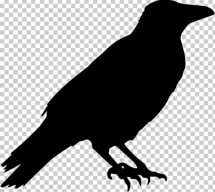 Common Raven Crow Halloween PNG, Clipart, American Crow.