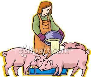Feeding Pigs.