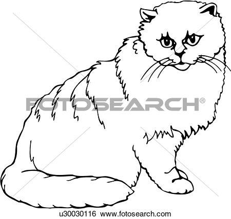 Clip Art of , animal, breeds, cat, chinchilla, feline, u30030116.