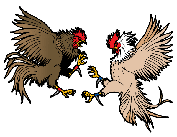 Cockfighting Vector Clip Art Image.