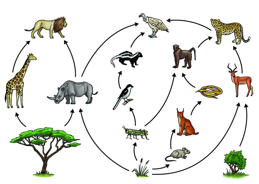 Food Chains and Food Webs.
