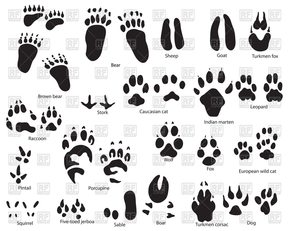 Set of animal and bird footprints with title Stock Vector Image.