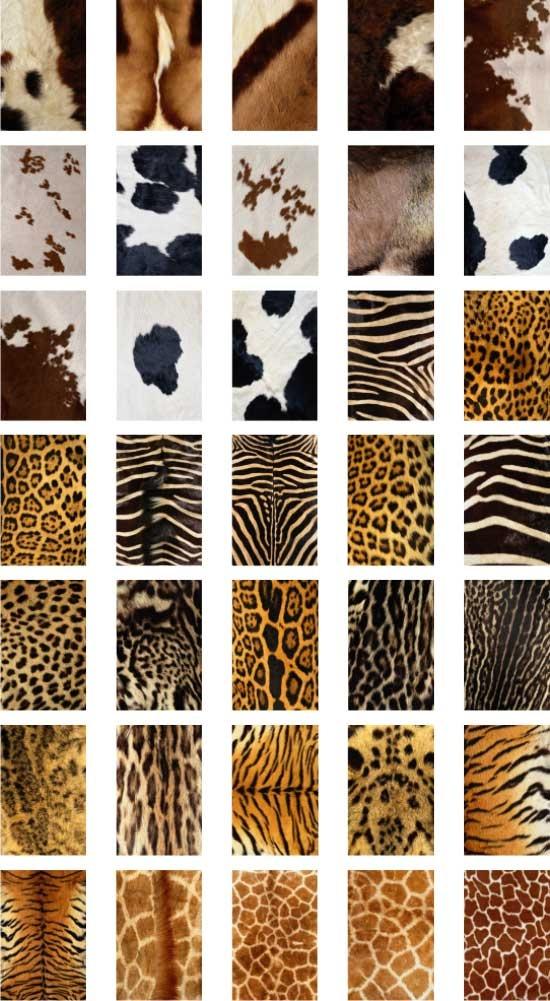 1000+ images about Fur & Animal Unit on Pinterest.