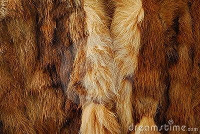 Clip Art Animal Furs Clipart.