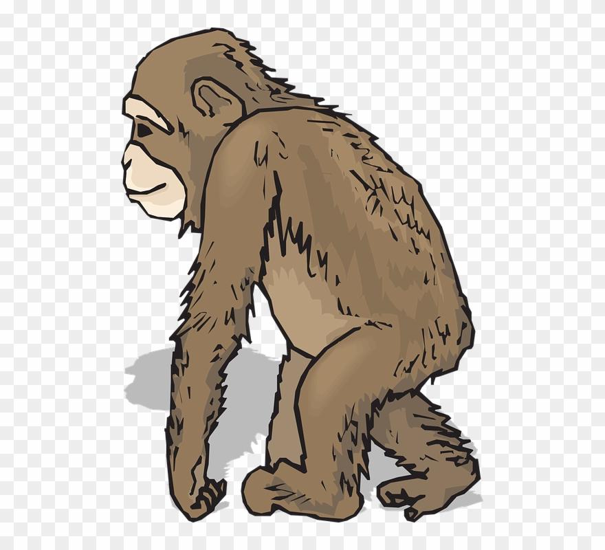 Chimpanzee Clipart Realistic.