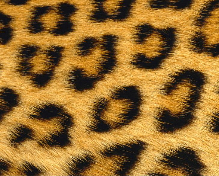 Giraffe Leopard Skin Animal Fur, leopard PNG clipart.