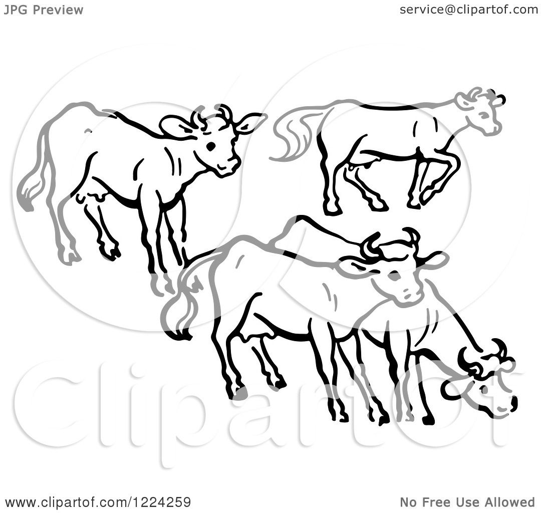 Clipart of Black and White a Group of Cows.