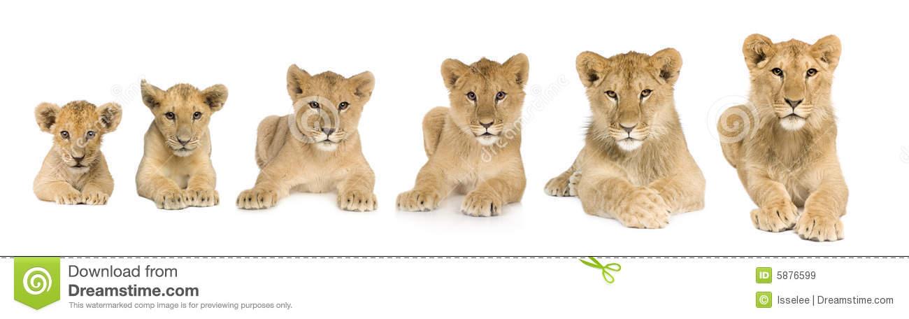 Animal Growth Clipart.