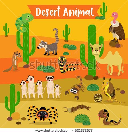 Image result for what animals live in the desert habitat usa.