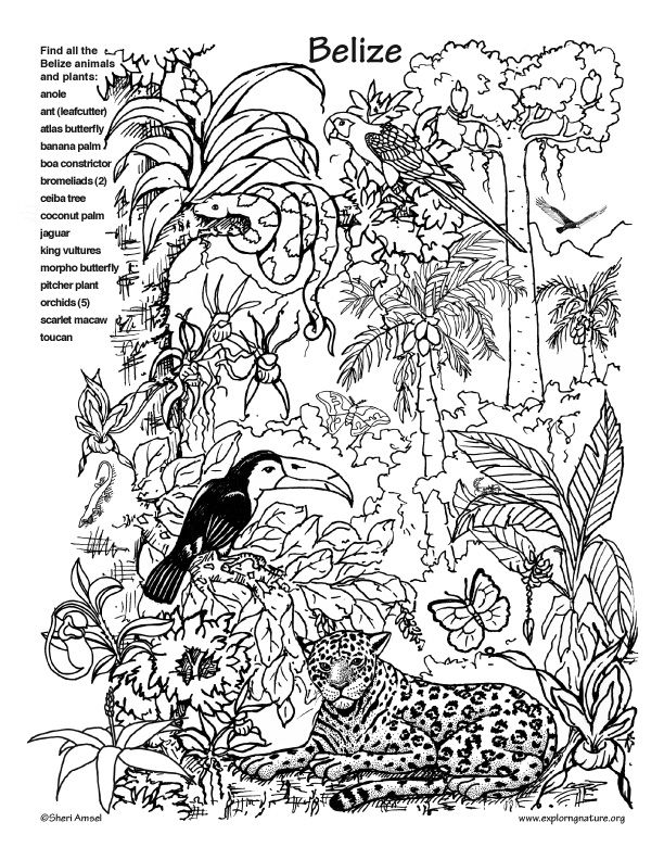Animal Hidden Clipart.