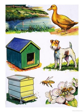 Animal homes clipart 4 » Clipart Portal.