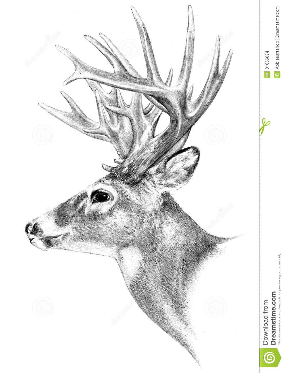 How to draw a deer head, buck, dear head.