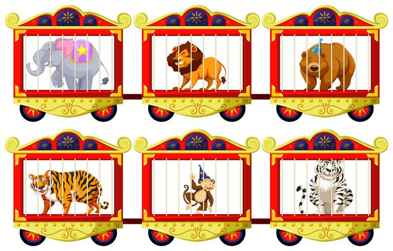 Wild animals in the circus cages.