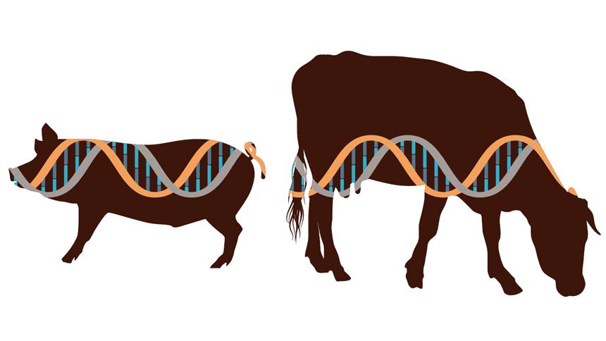 Genetic Engineering's New Age.