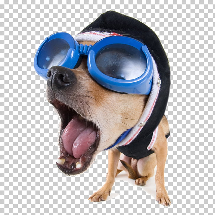 Dog Funny animal stock.xchng High.