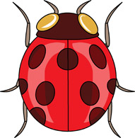 Cartoon animal clipart ladybug.