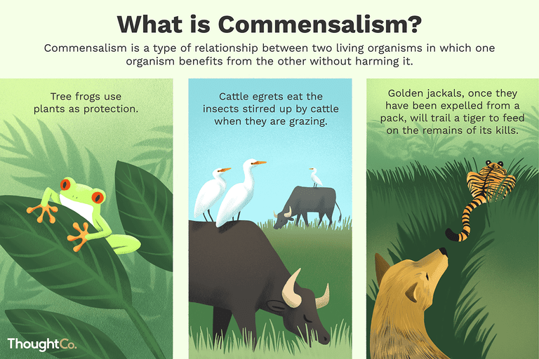 Commensalism Definition, Examples, and Relationships.