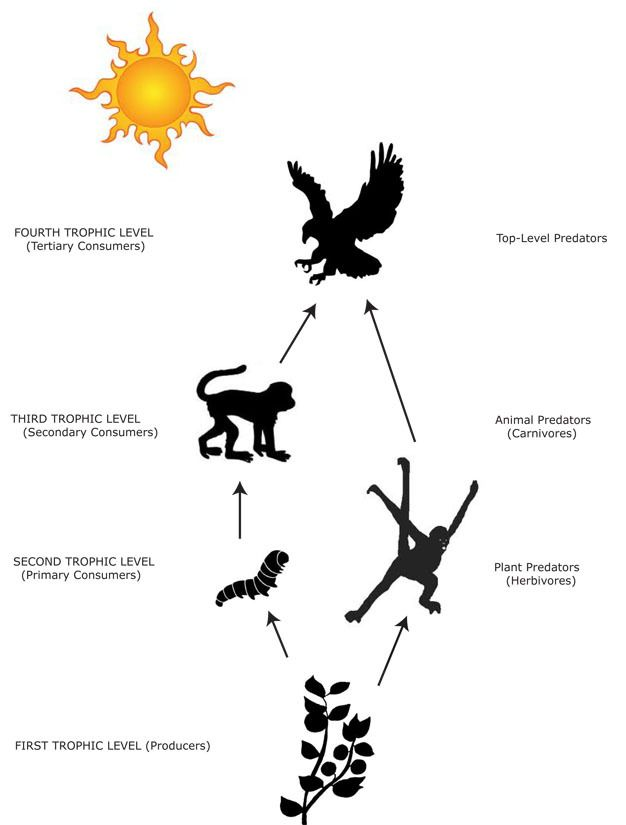 Primates in Communities: the ecology of competitive.