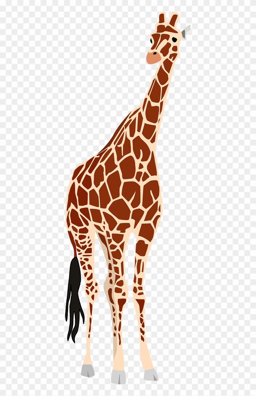 Animal kingdom realistic clipart photo clipart images.