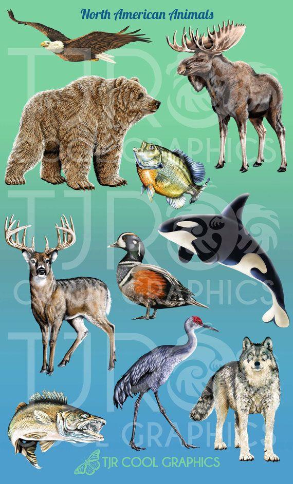 North American Animals Digital Realistic Clip Art, PNG.