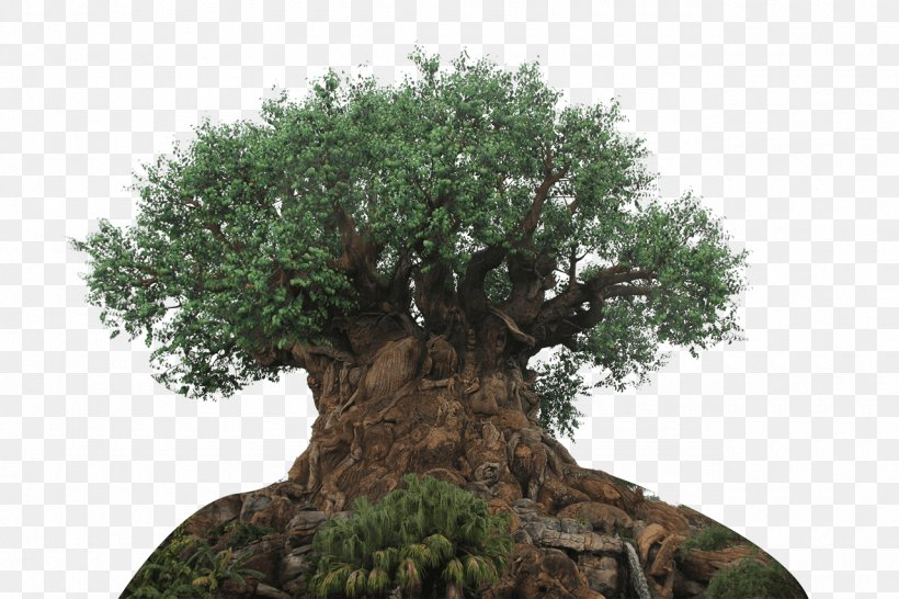 The Tree Of Life Expedition Everest Disney\'s Hollywood.