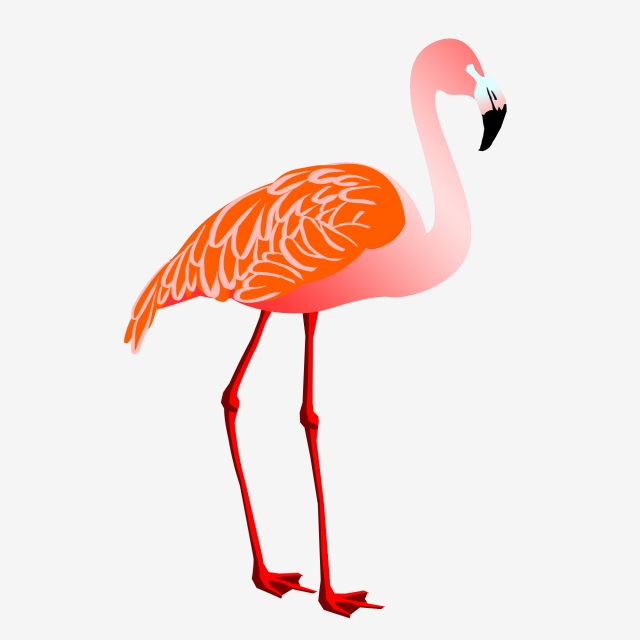 Flamingo Animal Illustration Watercolor Animal Long Legs, Hand.
