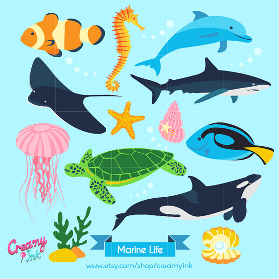 Ocean Digital Vector Clip art / Marine Life Clipart Design.