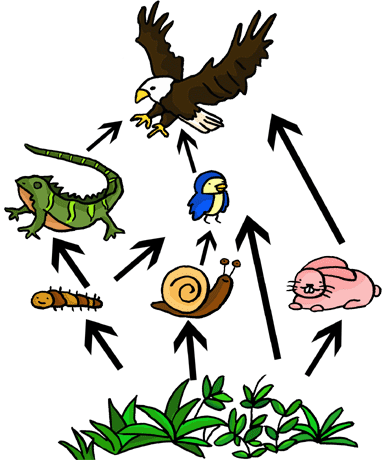 Animal limiting factors clipart clipart images gallery for.