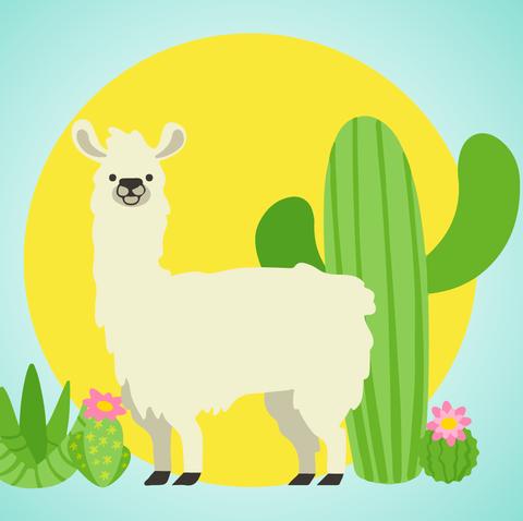 Llama Trend 2019.