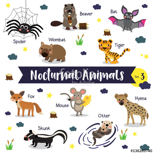 Nocturnal Animals Clipart.