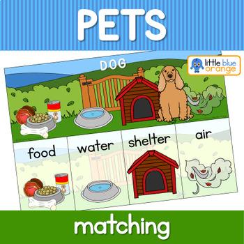 Pet animal needs activity.